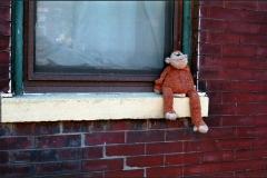 Monkey-Do_Aicardi-700GB