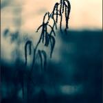 ESC_4538_Aicardi-700GB