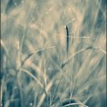 ESC_4546_Aicardi-700GB