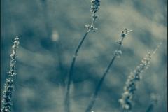ESC_4519_Aicardi-700GB