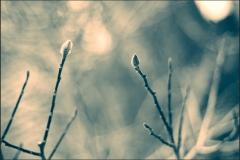 ESC_4581_Aicardi-700GB